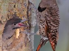 Two birds quarreling